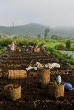 Agriculteurs de pomme de terre Images stock