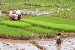 Agriculteurs malgaches labourant le champ agricole de la manière traditionnelle Photos libres de droits