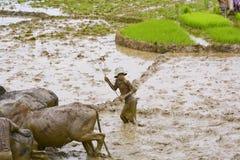 Agriculteurs malgaches labourant le champ agricole de la manière traditionnelle Photo libre de droits