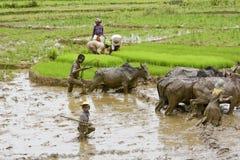 Agriculteurs malgaches labourant le champ agricole de la manière traditionnelle Image libre de droits