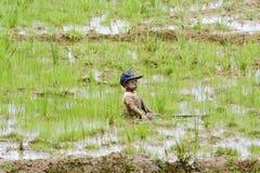 Agriculteurs malgaches labourant le champ agricole de la manière traditionnelle Images libres de droits