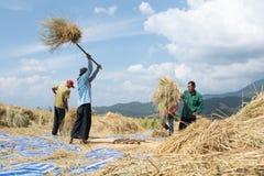 Agriculteurs moisson, battant images stock