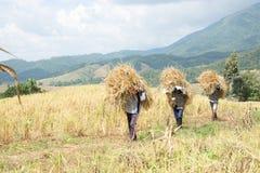 Agriculteurs moisson, battant image libre de droits