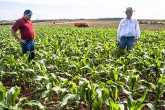 Agriculteurs non définis Photos stock