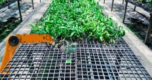Agriculteurs robotiques fut?s dans la plantation futuriste d'automation de robot d'agriculture images stock