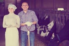 Agriculteurs se tenant ensemble dans l'étable Photographie stock