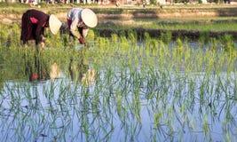 Agriculteurs sur les gisements en terrasse de riz au Vietnam Photo libre de droits