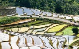 Agriculteurs sur les gisements en terrasse de riz au Vietnam Images stock
