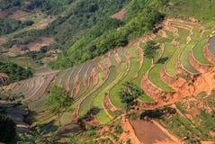 Agriculteurs sur les gisements en terrasse de riz au Vietnam Images libres de droits