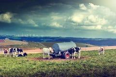Agricultral krajobraz z krowy stadem Zdjęcie Stock