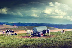 Agricultral landscape with cow herd Stock Photo