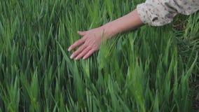 Agricultrice appr?ciant la nature et le soleil clips vidéos