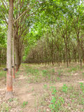 agricultura, Ásia, beleza, bacia, ramo, colheita, corte, gota, enviro Imagens de Stock