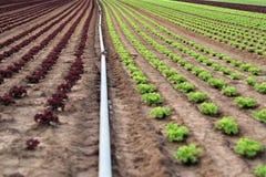 Agricultura fotos de archivo libres de regalías