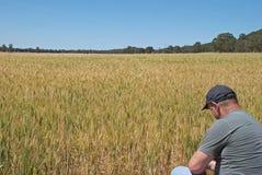 Agricultura Foto de Stock