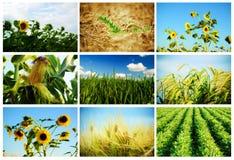 Agricultura Imagem de Stock