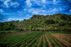 A agricultura imagem de stock royalty free