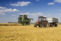 Agricultura Fotografia de Stock