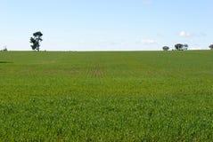 agricultura Imagens de Stock