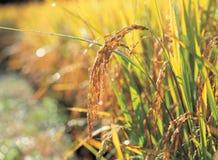 Agricultura fotografía de archivo libre de regalías