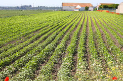 Agricultura Fotografía de archivo