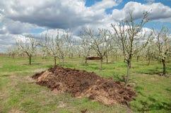 Agricultura, adubo no pomar foto de stock