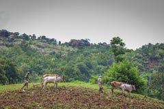 Agricultura antiga Foto de Stock