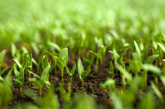 Agricultura biológica Fotos de archivo