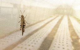 Agricultura biológica con la protección neta de nylon contra saltamontes del insecto fotos de archivo