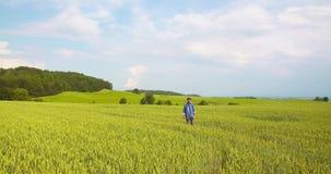 Agricultura canola ou campo de colza video estoque