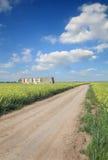 Agricultura, carretera nacional a través del campo del canola Fotografía de archivo