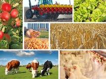 Agricultura - collage Fotografía de archivo