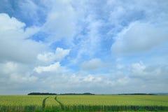 Agricultura con los campos de maíz Foto de archivo