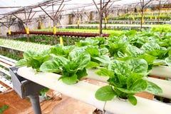 Agricultura da hidroponia Imagens de Stock