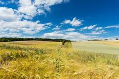 Agricultura da paisagem Fotografia de Stock