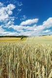 Agricultura da paisagem Foto de Stock