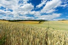 Agricultura da paisagem Fotos de Stock
