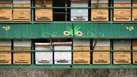 Agricultura de la colmena de la abeja almacen de metraje de vídeo
