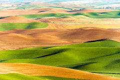 Agricultura de Rolling Hills de las tierras de labrantío de la mota de Steptoe de la región de Palouse fotografía de archivo libre de regalías