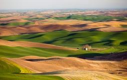 Agricultura de Rolling Hills de las tierras de labrantío de la mota de Steptoe de la región de Palouse foto de archivo
