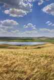Agricultura de Summetime Paisagem rural do verão de Itália Entre Apulia e Basilicata: campo montanhoso com campos de trigo foto de stock royalty free