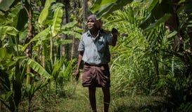 Agricultura del árbol de plátano en Kerala fotos de archivo