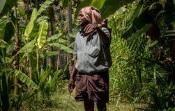 Agricultura del árbol de plátano en Kerala fotos de archivo libres de regalías