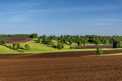 Agricultura del abedul del surco del prado del campo Imagen de archivo