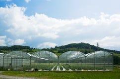 Agricultura del invernadero Imagen de archivo libre de regalías