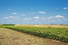 Agricultura del paisaje Imagenes de archivo
