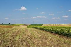 Agricultura del paisaje Fotos de archivo libres de regalías