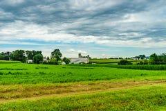 Agricultura do campo do celeiro da exploração agrícola do país de Amish e vacas da pastagem em Lancaster, PA imagens de stock