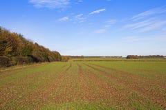 Agricultura do outono Imagem de Stock Royalty Free
