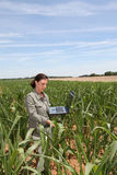 Agricultura e ambiente imagem de stock